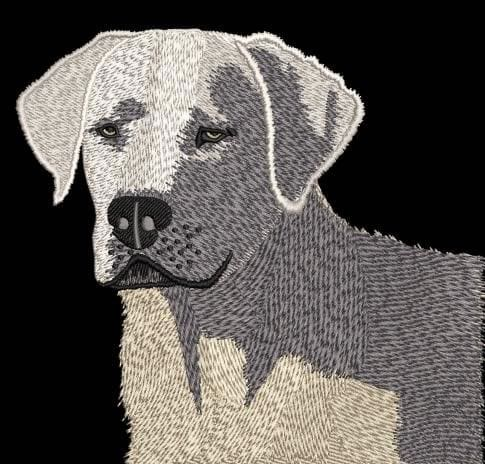 White Labrador Digitizing After