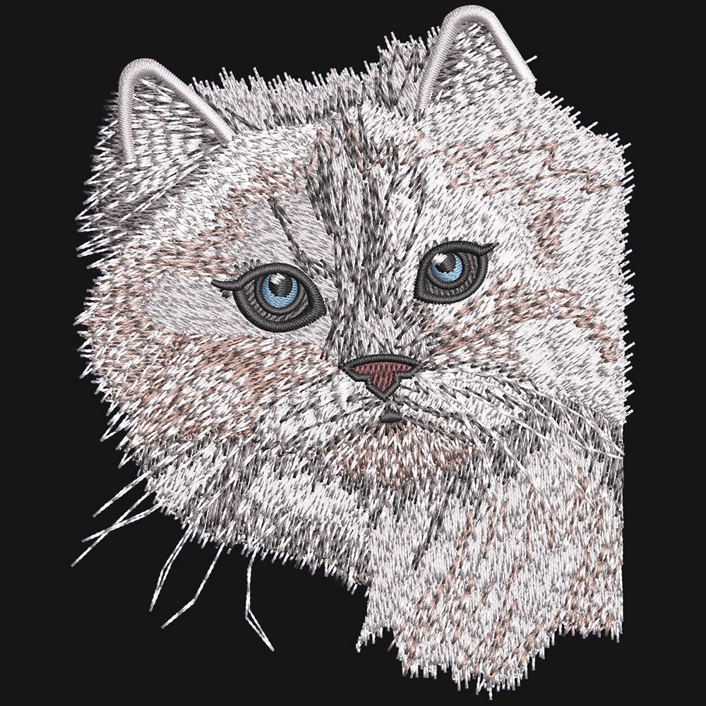 The Peeking Cat